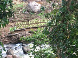 riverside farming