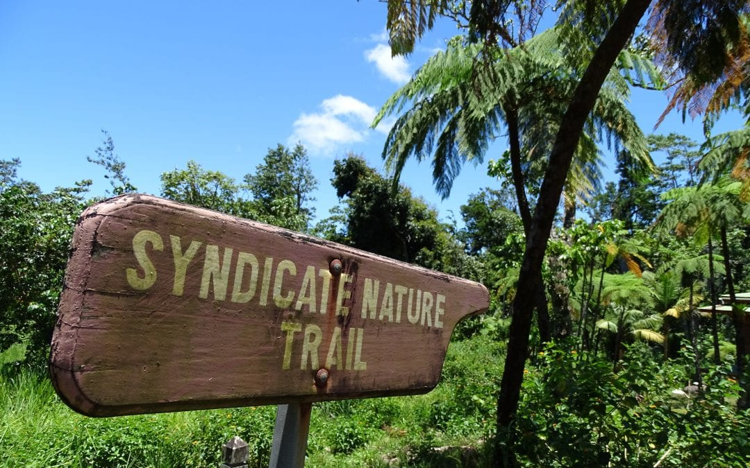 Fifty shades of green; Syndicate & Milton Falls
